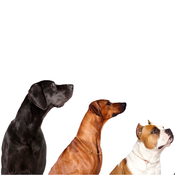 3 dogs side view in order of big, medium and small