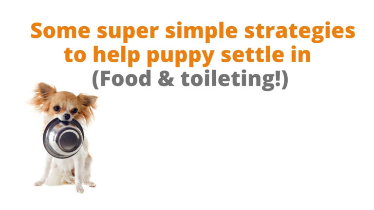 some super strategies to help puppy settle in picture of puppy with food bowl