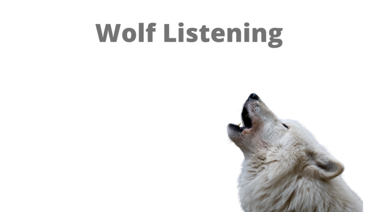 A picture of a wolf howling