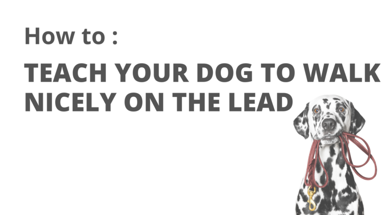 A pictre of a dog with a lead in its mouth