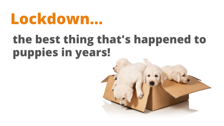Picture of puppies in a cardboard box