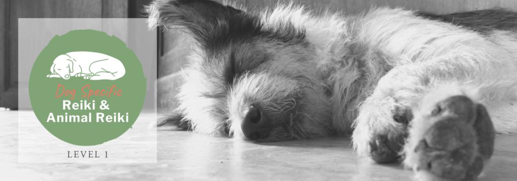 Dog Specific Reiki and Animal Reiki Level 1 banner