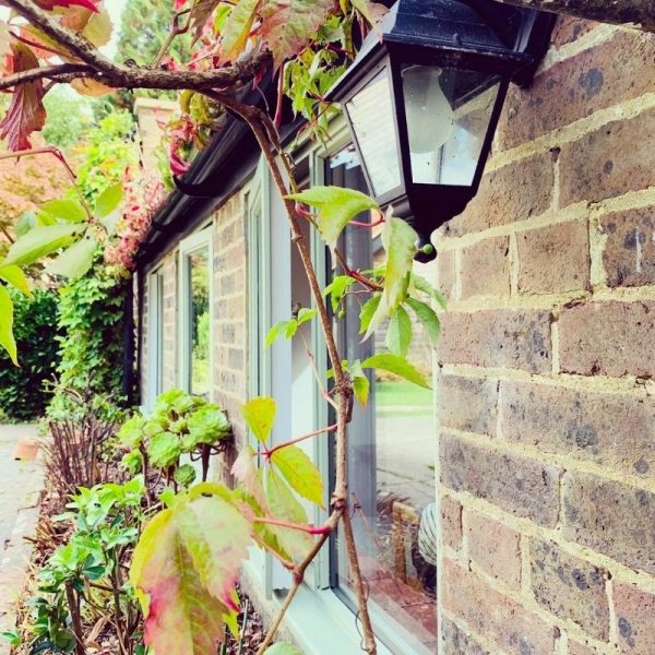 Picture of an outside light and a bush
